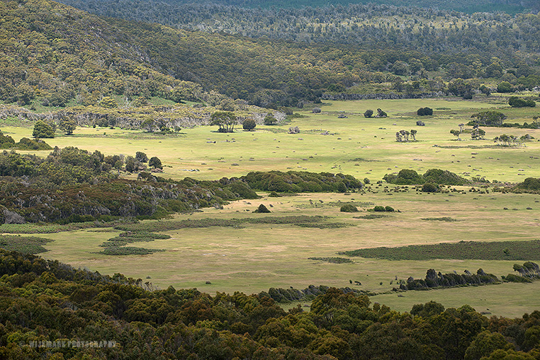 The savanna-like grasslands of Narawntapu seen from a nearby hill.